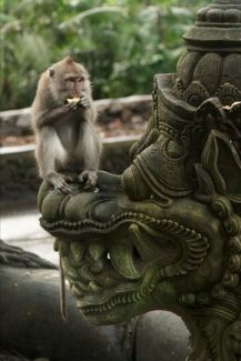 6. Meet Monkey (Ubud - Monkey Forest) /Photo: Pinterest