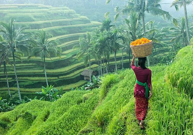 rice-paddies-in-ubud